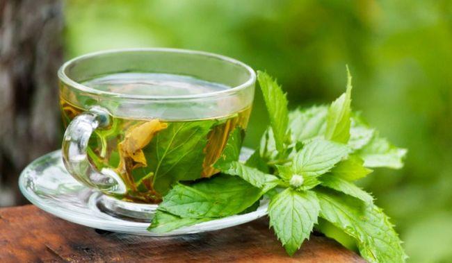 Zielona herbata w czasie ciąży
