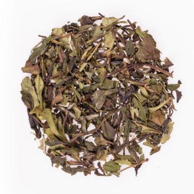 Herbata biała Oolong Caramel susz fotografia