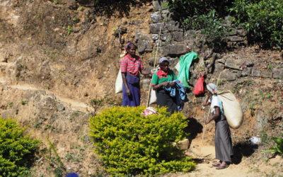 Sri lanka i hebata